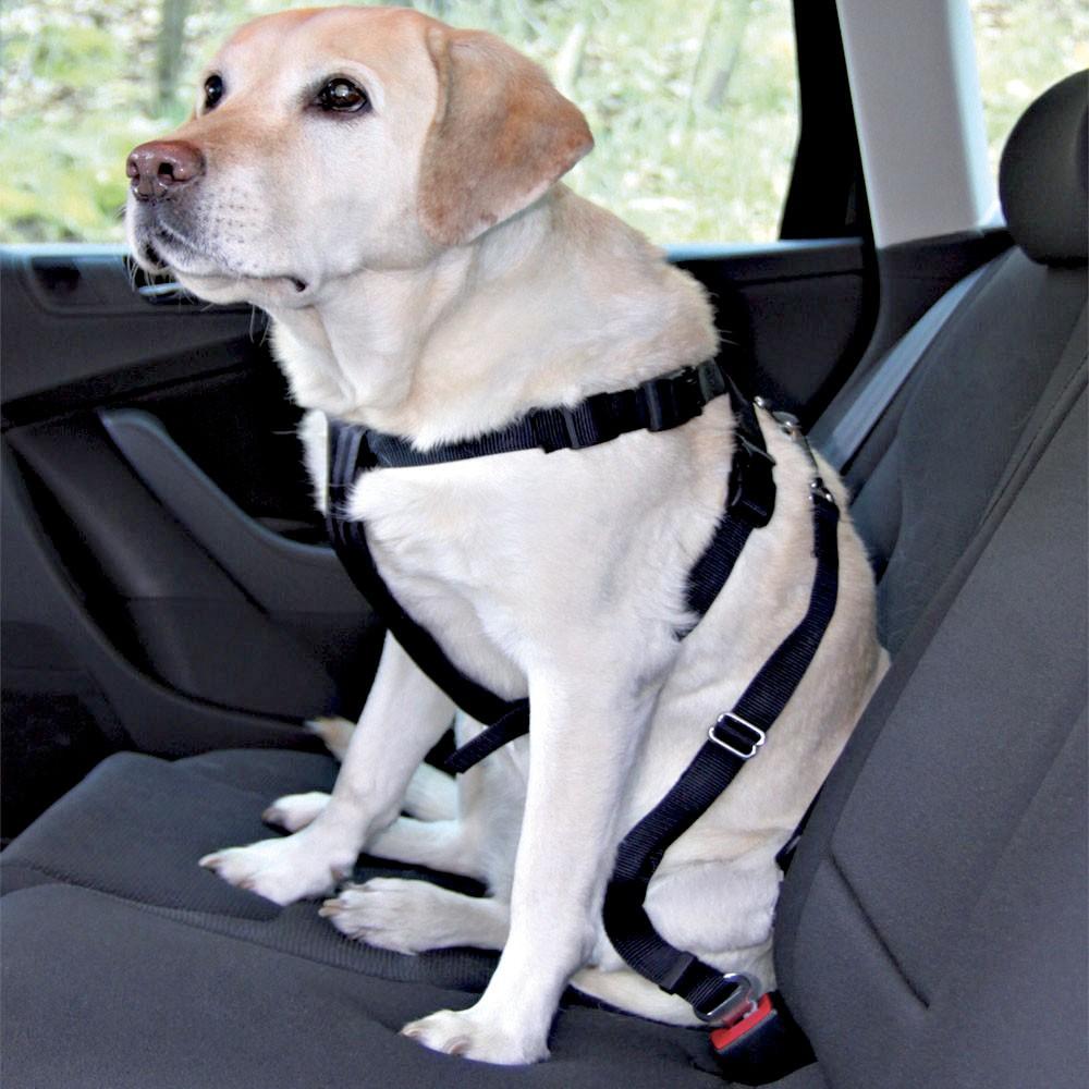 viajar carro perro arnes