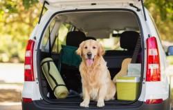 ¿Sabes cómo llevar a tu mascota en el auto?