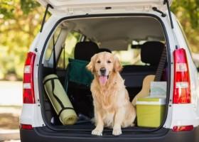 viajar perro carro